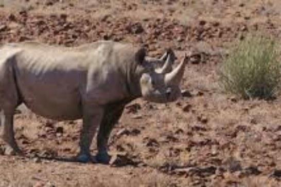 Conservancy puts Kunene Region on World Tourism map