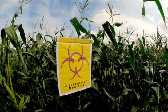 Stiffer regulations on GMO imports implemented soon