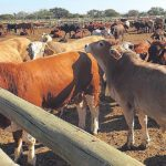 Country could face temporary shortage of meat and animal products
