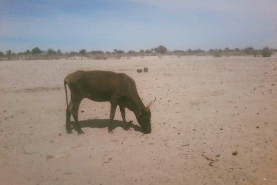Poor rainfall raise fears of poor harvests