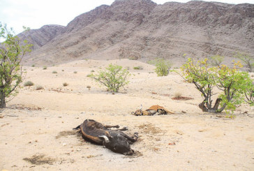 Agricultural sector pulls resources for drought crisis