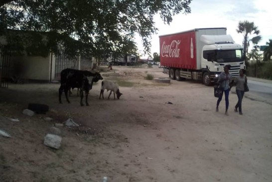 Drought forces animals to forage in towns