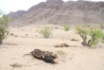 Drought is a national crisis – Urgent intervention critical