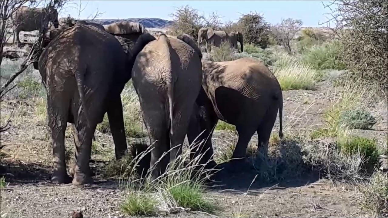 Elephants in Erongo Region still troublesome
