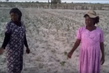 """Northern Namibia faces """"unprecedented"""" drought"""