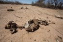 Urgency to declare the drought as national disaster