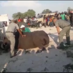 Escaped rhino returned to Etosha