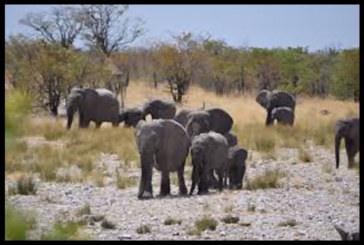 A herd of elephants occupies boreholes in Omusati