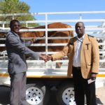 Ohangwena Governor donates ox to support school