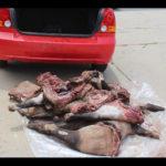 Senior NDF officer arrested for poaching