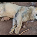 Poachers arrested for killing protected wildlife