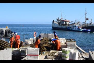 White mussel harvesting near Walvis Bay suspended