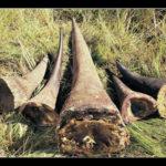 Theft of 34 rhino horns will damage Namibia's reputation