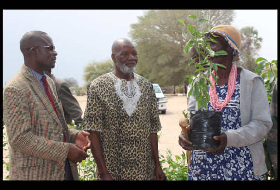 Fruit tree planting project aimed at economic development