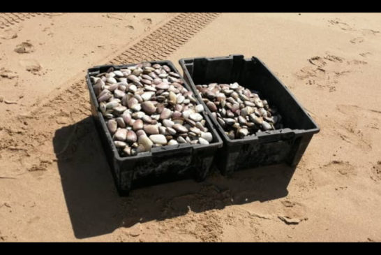 Mussel harvesting has coastal residents up in arms