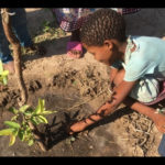 Tree planting project will benefit San