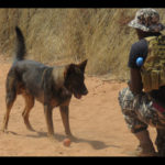 Nampol and Unam continue agreement for K9 health