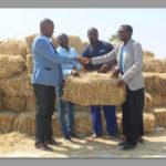 Sinco donates fodder worth N$ 116 000