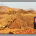 Dead elephant found in Kunene Region